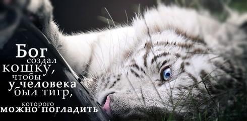 Bóg stworzył kota, by człowiek miał tygrysa, którego może pogłaskać
