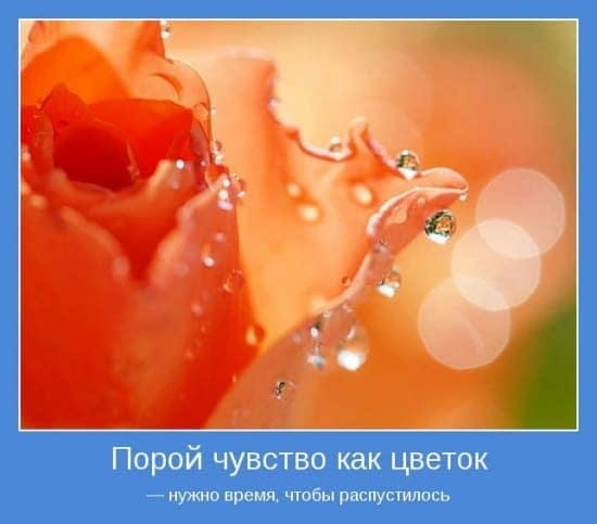 Czasem uczucie jest jak kwiatek - potrzebuje czasu by rozwinąć się.